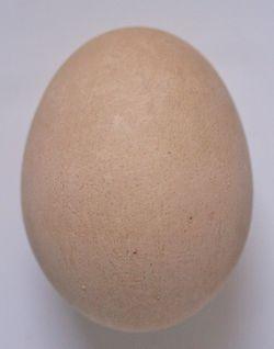 Easter egg beets