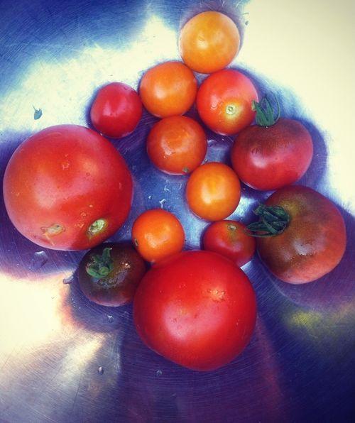 Garden update tomatoes