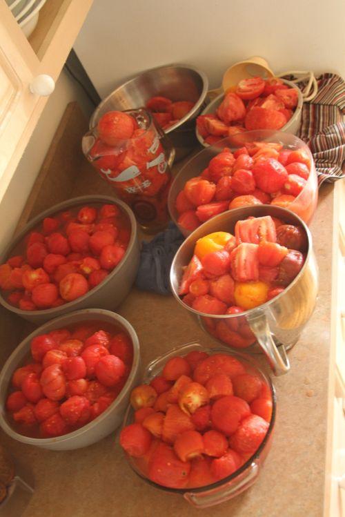 Tomatoes 2012 8