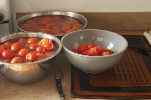 Tomatoes 2012 4