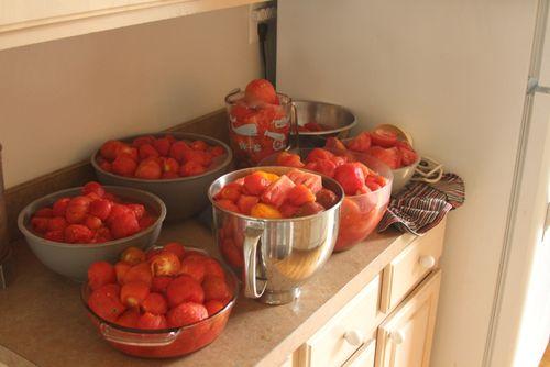 Tomatoes 2012 7