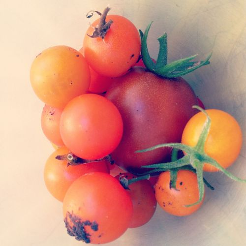 Sept-tomatoes