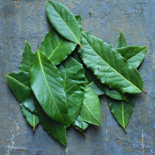 Bay leaf 2