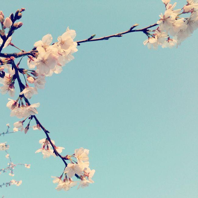 Huntsville tree