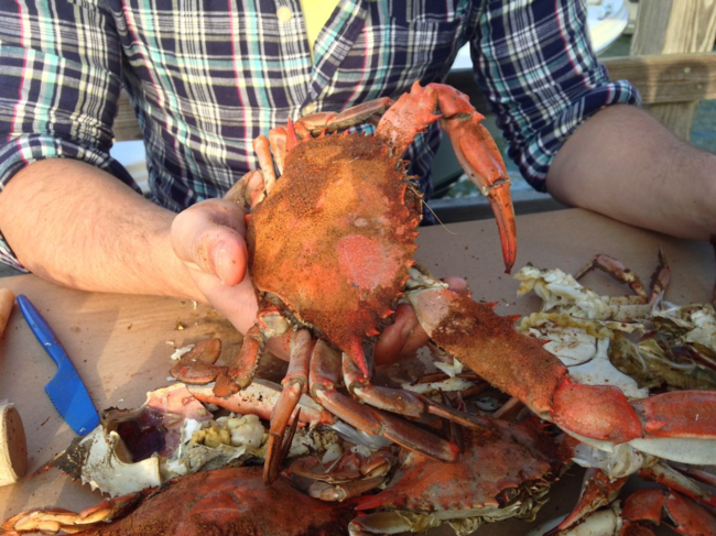 Holding Maryland crab at an outdoor table