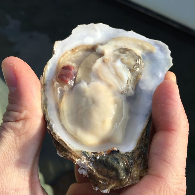 Oyster with Crab